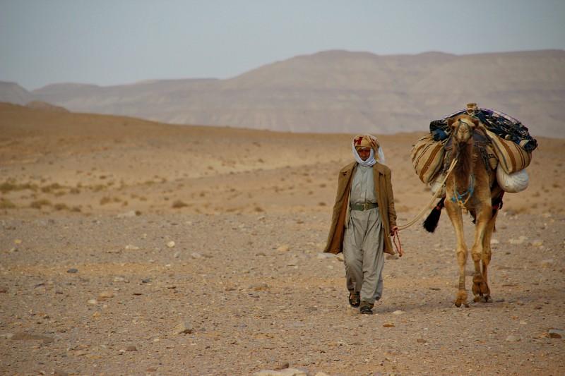 stichting dalèl de kameel en de bedoeïen