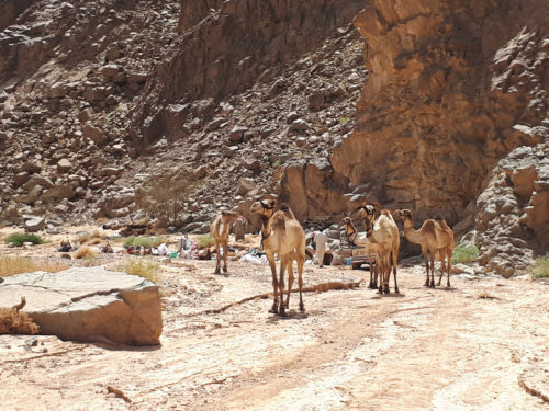 kamelenwelzijn op clean ups stichting dalel