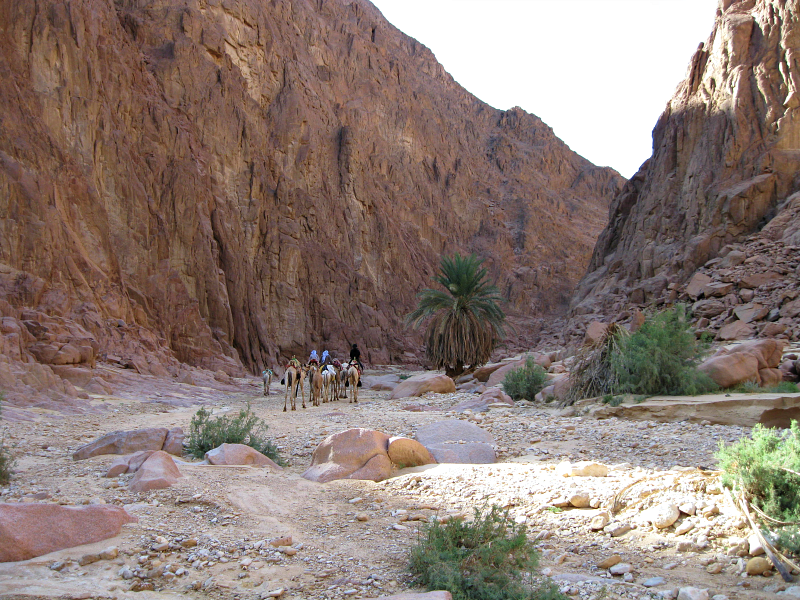 schip van de woestijn-stichting dalel en desertjoy