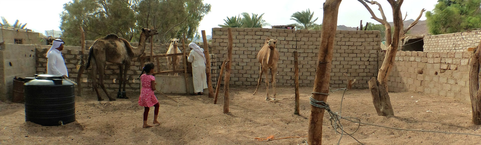 basics4camels dalel foundation