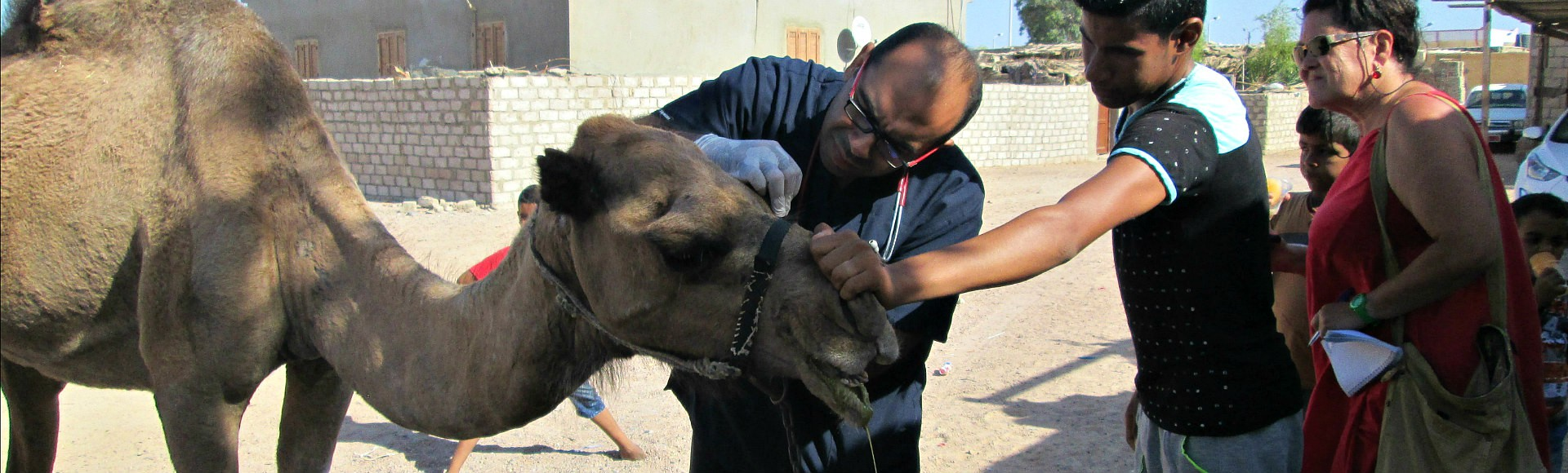 medical health care for camels-dalel foundation