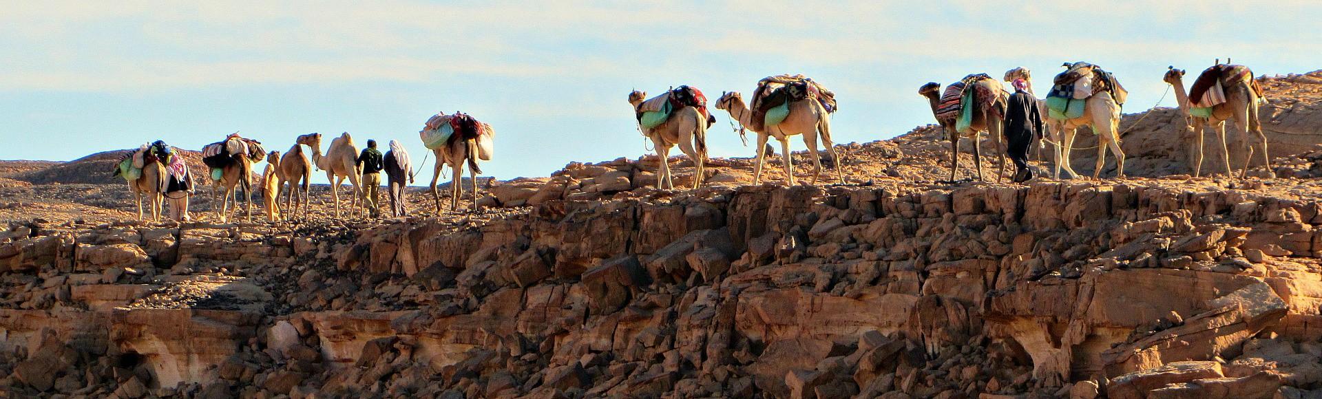 de kameel en de bedoeïen