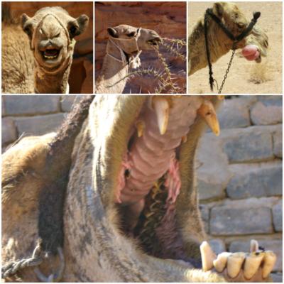 lippen en mond kameel-stichting dalel