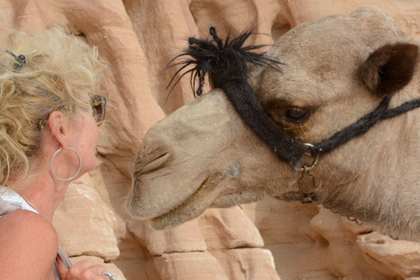 adopt a camel dalel foundation