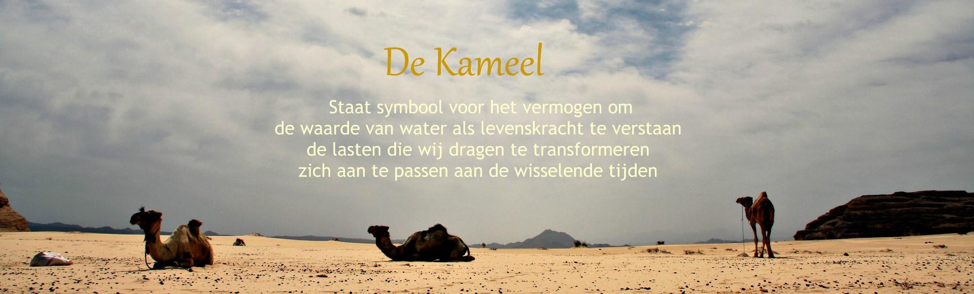 de kameel symboliseert - stichting dalel