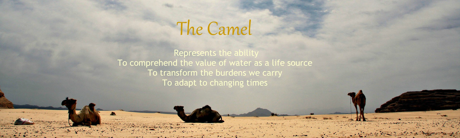 the camel symbolizes - dalel foundation